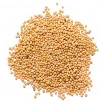 семена желтой горчицы